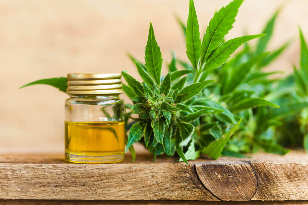 hemp plant on wood table and oil in glass jar
